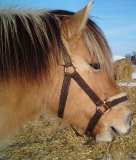 spænder til hest